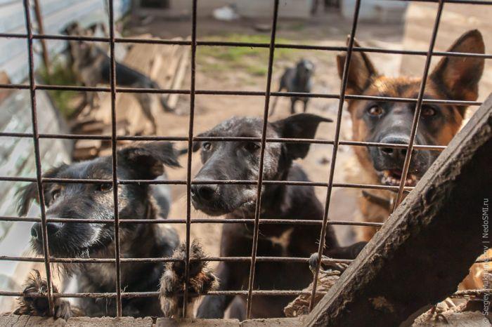 Спасение животных, как смысл жизни (24 фото)