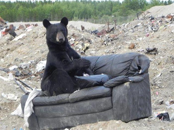 Новый владелец старого дивана (3 фото)