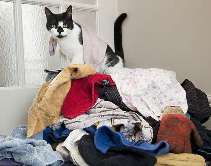 Кот-клептоман (7 фото)