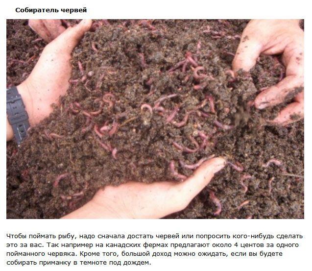Самые странные профессии на Земле (10 фото)