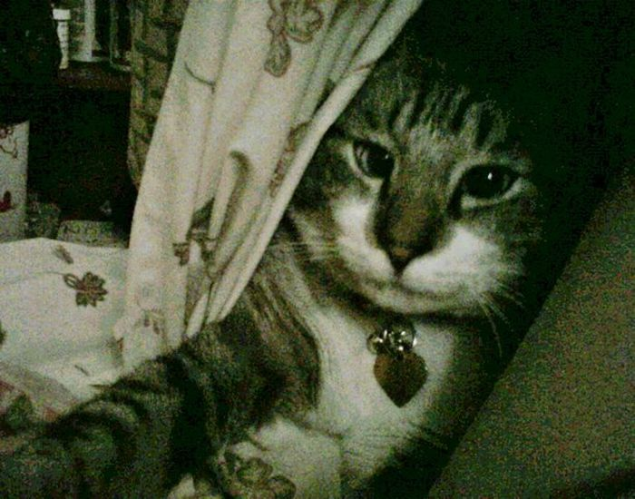 Кот, над которым все смеются (22 фото)