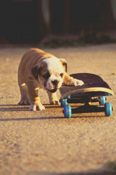 Позитивные снимки с собаками (48 фото)