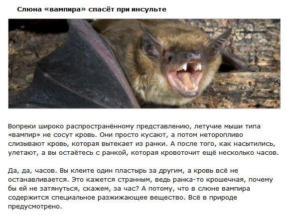 Пугающие животные, которые могут спасти человека (4 фото)