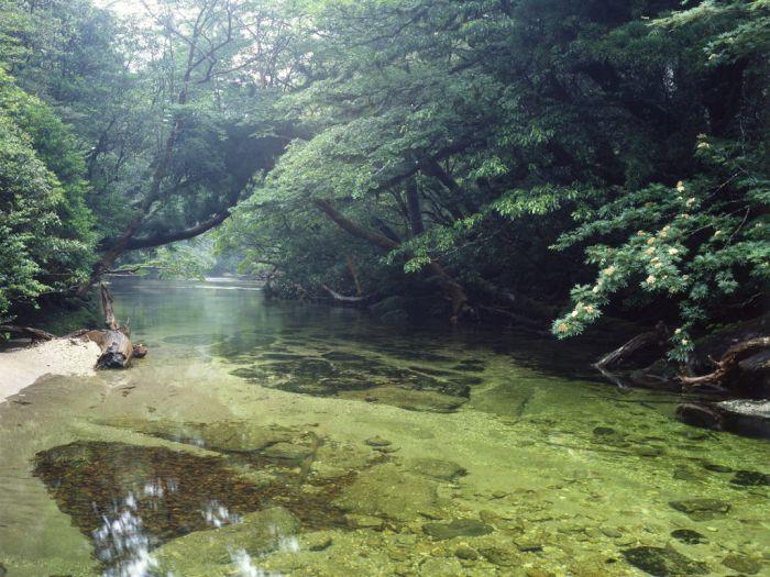 Удивительная природа японского острова Якусима (12 фото)