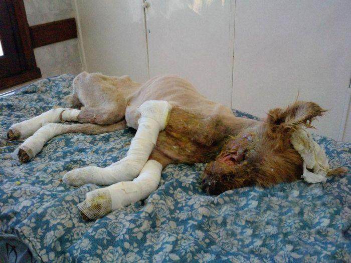 Девушка не смогла пройти мимо умирающей собаки (17 фото)