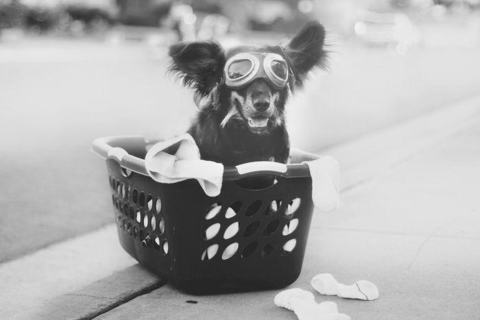 Собака - друг, который никогда не предаст (40 фото)