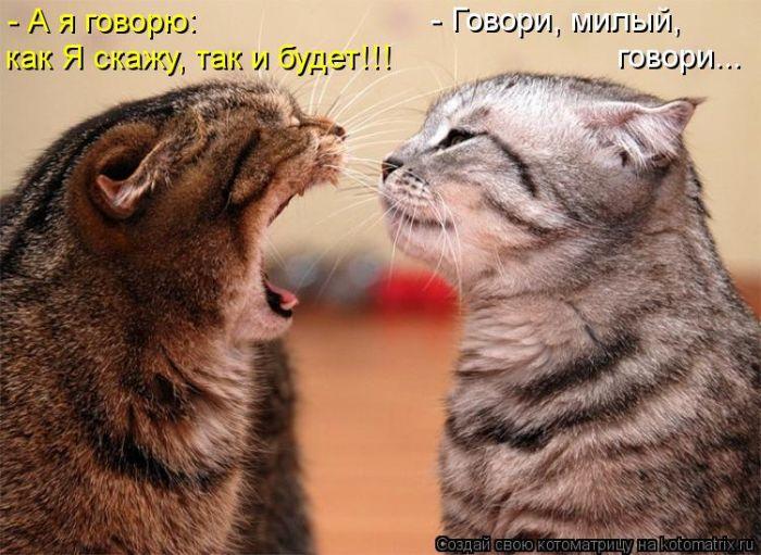 http://cdn.trinixy.ru/pics5/20121005/kotomatrix_01.jpg