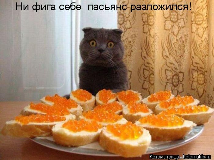 http://cdn.trinixy.ru/pics5/20121005/kotomatrix_30.jpg