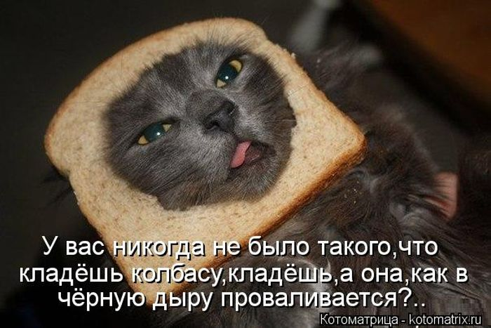 http://cdn.trinixy.ru/pics5/20121005/kotomatrix_41.jpg
