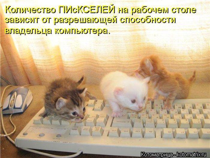 http://cdn.trinixy.ru/pics5/20121005/kotomatrix_50.jpg