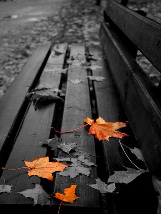 Осень во всей красе (40 фото)