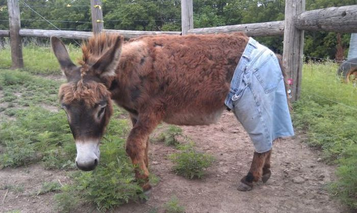 Современная мода на странные штаны (34 фото)