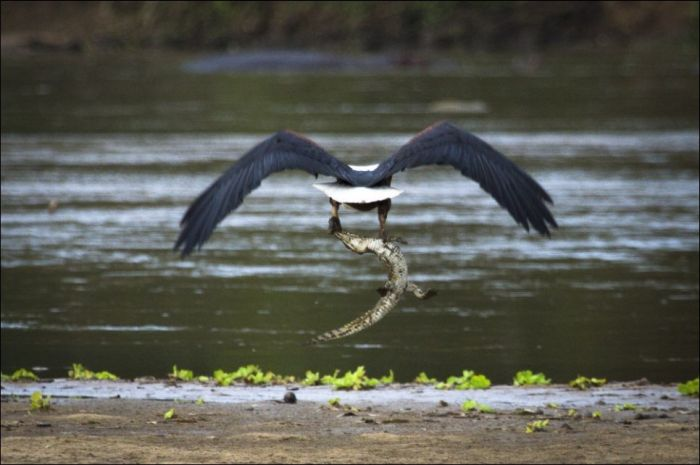 Ava giden avlanır(4 Fotograf)
