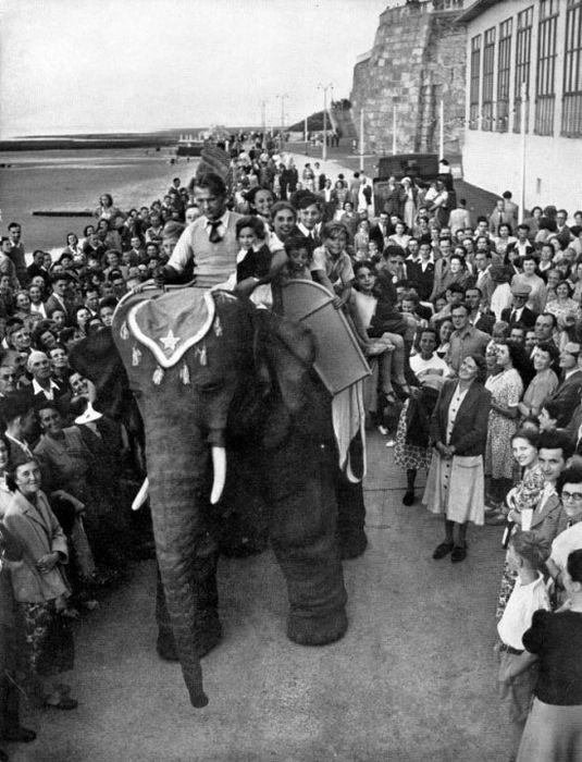 Уникальный робот-слон 50х годов (8 фото)