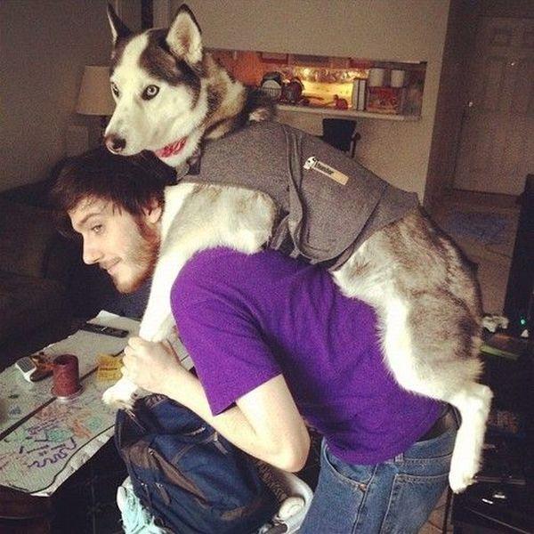 Thumbnail: лайка, собака, человек.