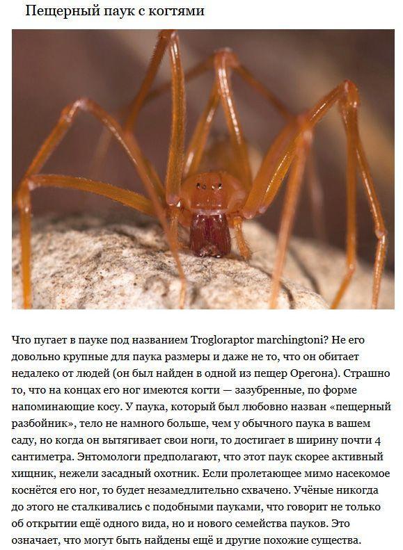 ТОП-5 существ, ранее не известных науке (5 фото)