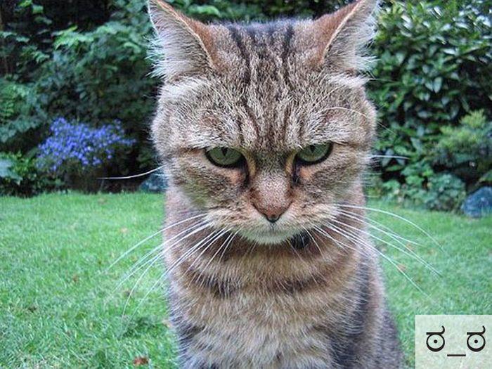 Забавные эмоции прикольных котов (23 фото)