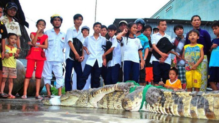 Массовый побег крокодилов (21 фото)