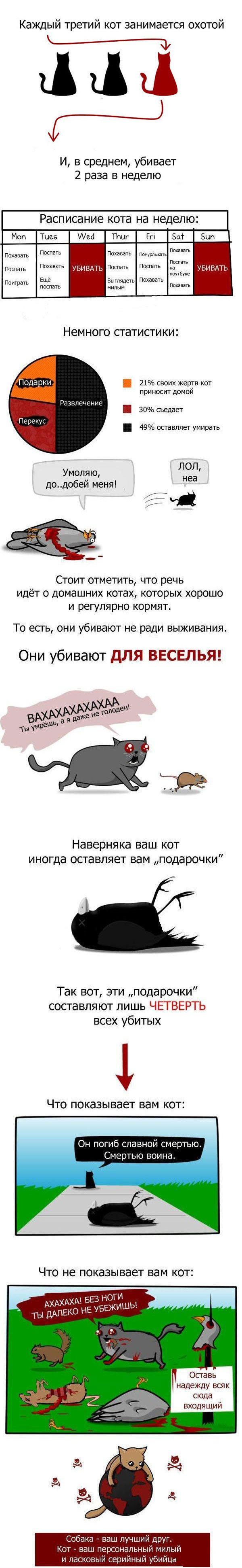 Вся правда о домашних котах (1 картинка)