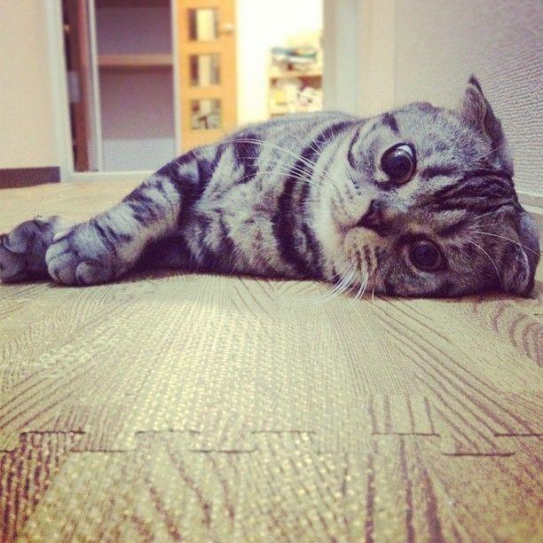 Кошка Шиши Мару - звезда редактора Instagram (56 фото)