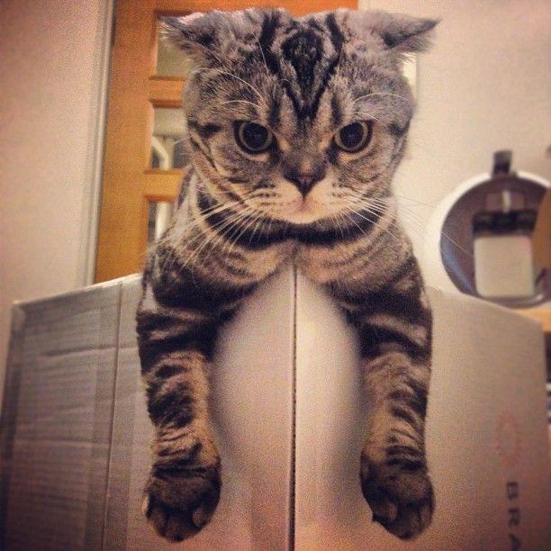La vida de un gato en imagenes