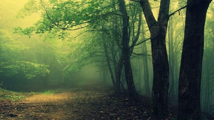 ТОП-10 таинственных лесов с нечистой силой (10 фото)