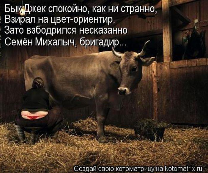 прикольные картинки доение быка светловолосая