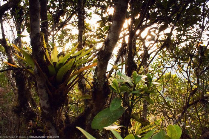 Удивительные макро синимки редких тропических насекомых (108 фото)