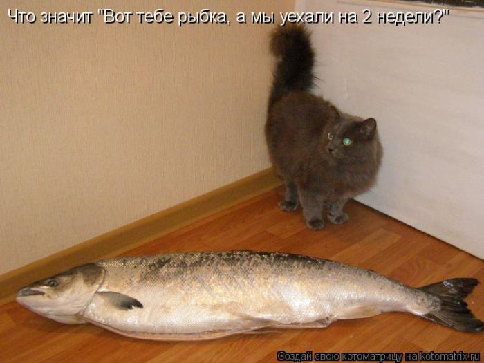 http://de.trinixy.ru/pics5/20121109/kotomatrix_01.jpg
