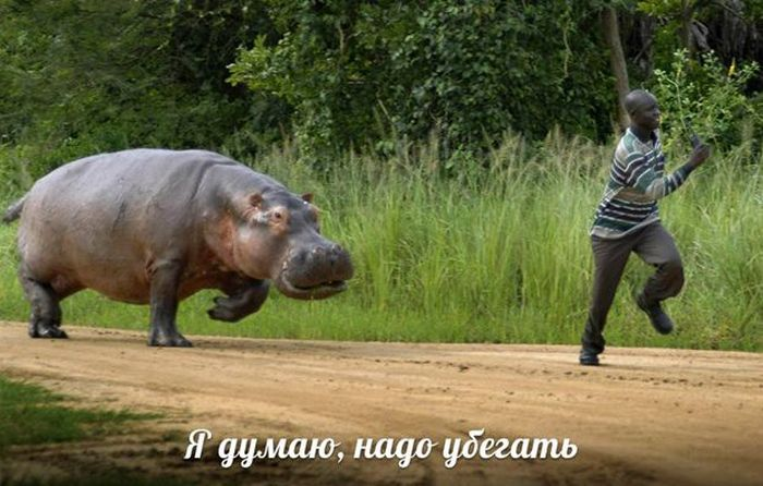"""Смешные фотографии в стиле: """"Я думаю, надо убегать!"""" (27 фото)"""