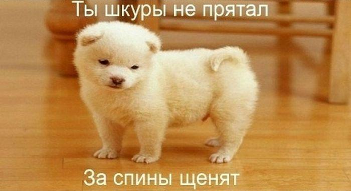 """Заразительный трек: """"Комбат, батяня, котяня, вомбат!"""" (5 картинок)"""