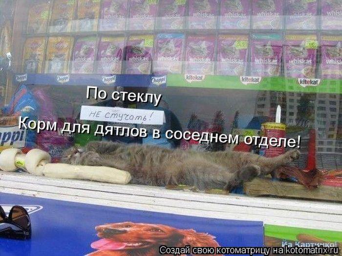 http://de.trinixy.ru/pics5/20121116/kotomatrix_06.jpg