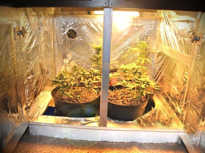 Конопля выращивание в шкафу что делать когда перекурил марихуаны