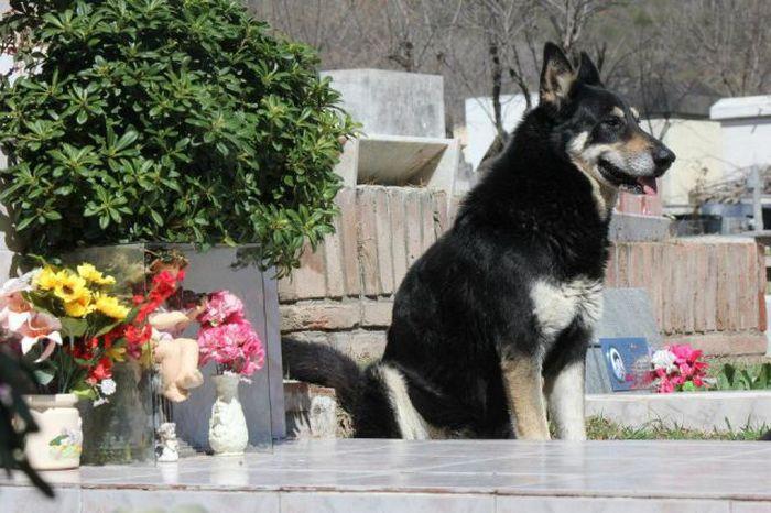 История вечной дружбы между человеком и собакой (11 фото)