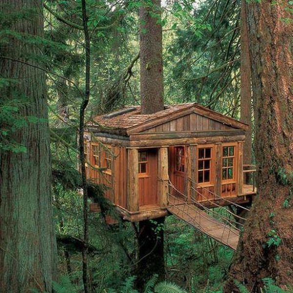 Интересные идеи по размещению домов на деревьях (40 фото)