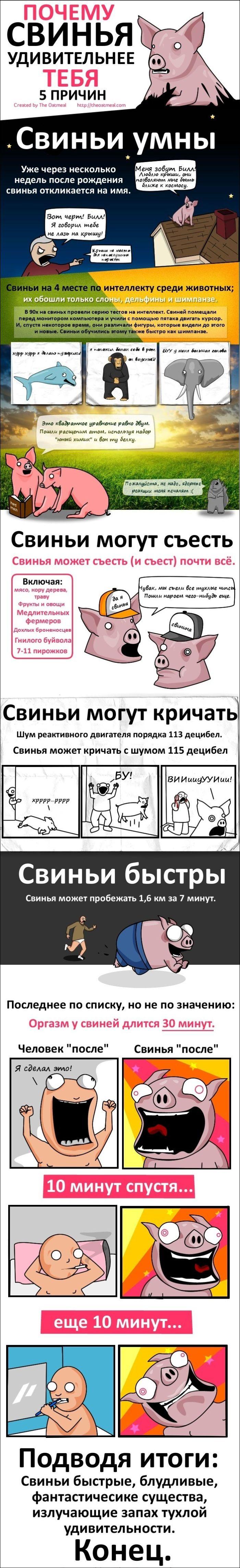 Свиньи - удивительные создания (1 картинка)
