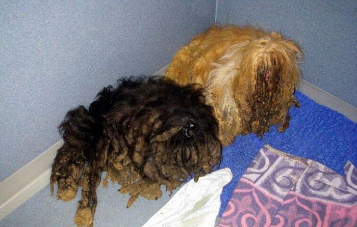 Спасение двух собак (4 фото)