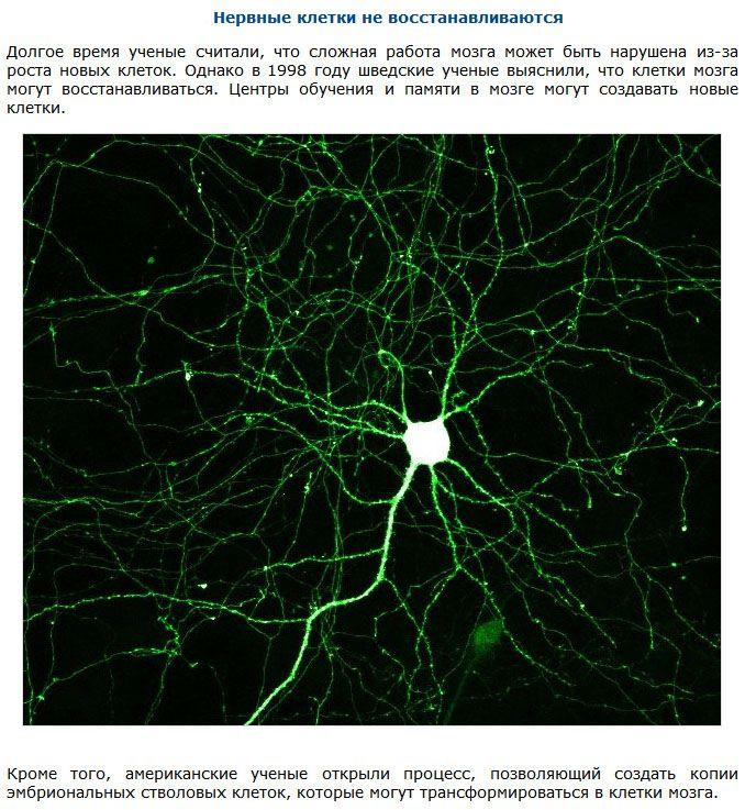 Научные мифы (10 фото)