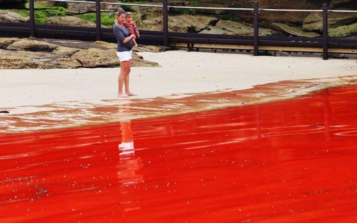 Кровавый океан у берегов Австралии (10 фото)