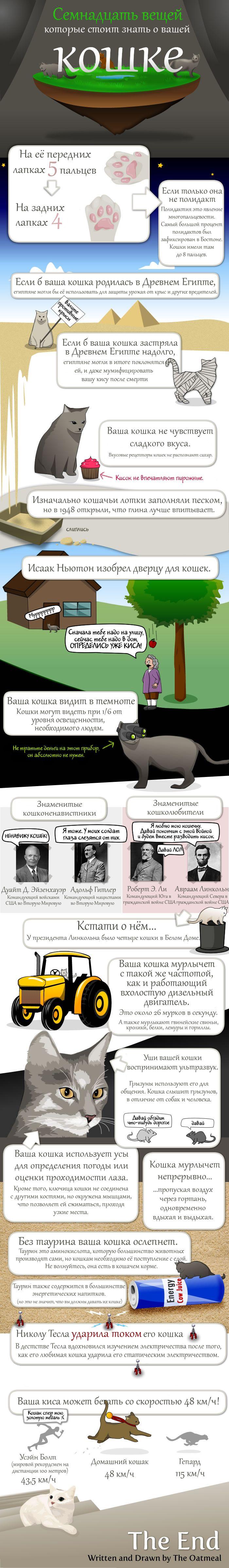 То, чего многие не знали о котах (1 картинка)