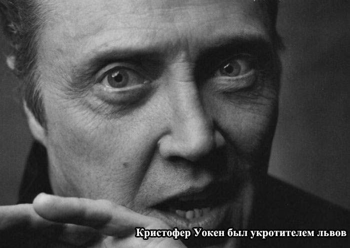 http://trinixy.ru/pics5/20121130/zvezdi_03.jpg