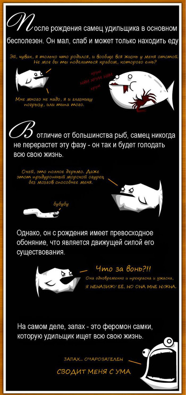 Яркая, но короткая жизнь самца удильщика (6 картинок)