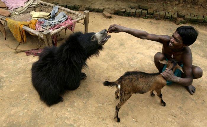 Лучшая коллекция снимков животных за 2012 года (50 фото)
