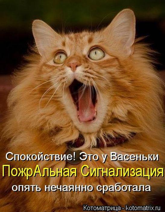 Котоматрицы - это такие смешные картинки с животными, которые прикольно прокомментированы людьми.