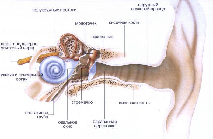 Интересные факты об организме человека (10 фото)