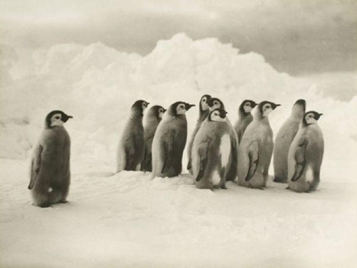Удивительные снимки провальной экспедиции Эрнеста Шеклтона (75 фото)