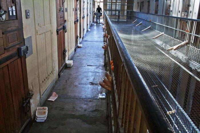 Тюрьма в Марселе является одной из худших в Европе (20 фото)