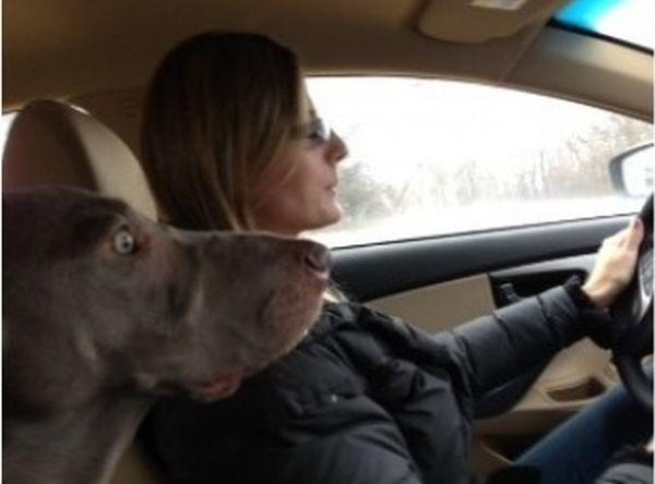 Когда поездка в машине становится действительно страшной (2 фото)
