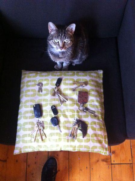 Кот-мечта любого квартирного вора (6 фото)
