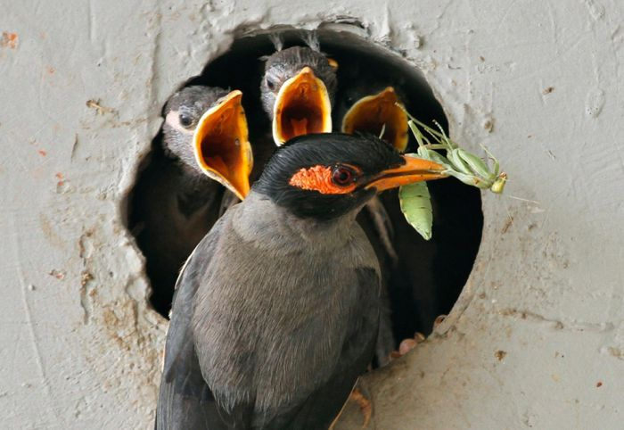 Лучшие снимки природы и удивительных животных за 2012 год (53 фото)